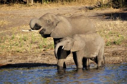Noleggio Camper Botswana - Camper Affitto Botswana